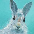 Curious Grey Rabbit by Jan Matson