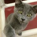 Curious Kitten by Diane Macdonald