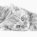 Curious Kitten by Frances Vincent