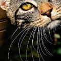 Curious Kitten by Meirion Matthias