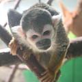 Curious Monkey by Lynn Michelle