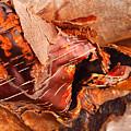 Curled Bark by Tara Turner