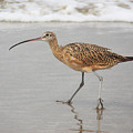 Curlew In The Surf by Alison Salome
