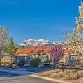 Curti Ranch Reno Nevada Spring by Scott McGuire