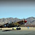 Curtis P40 Warhawk by Paul Ker