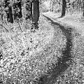 Curving Path Through Woods by Donald  Erickson