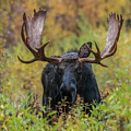 Custer In Autumn by Yeates Photography