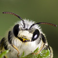Cute Bee by Andre Goncalves