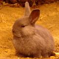 Cute Bunny by Jeff Swan