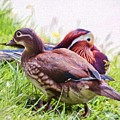 Cute Couple - Mandarin Ducks by Kerri Farley