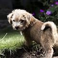 Cute Dog by Benjamin Langford