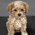 Cute Dog  by Nesrin Gulistan