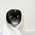 Cute Dog Wrapped by Emma Mayfield Photography