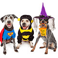 Cute Dogs Wearing Halloween Costumes by Susan Schmitz