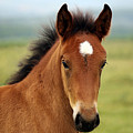 Cute Foal by Thomas Stracke