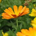 Cute In Orange by John Loyd Rushing