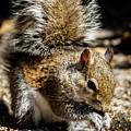 Cute Little Brown Squirrel by Sabrina L Ryan