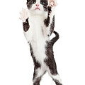 Cute Playful Kitten With Paws Up In Air by Susan Schmitz