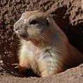 Cute Prairie Dog Climbing Out Of A Hole by DejaVu Designs