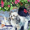 Cute Shih Tzu Dog Under Geranium  by Irina Sztukowski