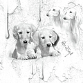 Cute White Salukis With Puppies by Maria Astedt