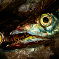 Cutlassfish Eyes by Venetta Archer
