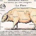 Cuts Of Pork by French School