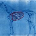 Cyanotype Horse embroidery anatomy blue print cyanotypes