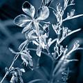 Cyanotype Morn by Trish Hale