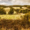 Cygnet Rustic Farming Fields by Jorgo Photography - Wall Art Gallery