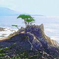 Cypress At Carmel by Todd L Thomas