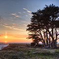 Cypress At Sunset by Alan Kepler