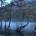 Cypress Awakening by Tamyra Ayles