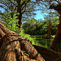 Cypress Bend Park In New Braunfels by Judy Vincent