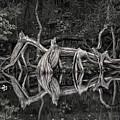 Cypress Design by Steven Sparks