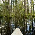 Cypress Garden Swamp by Dustin K Ryan