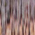 Cypress Grove Abstract by Francesa Miller