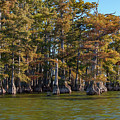 Cypress Grove Four by Bob Phillips