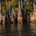 Cypress Grove Two by Bob Phillips