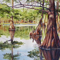 Cypress In Lake Chicot by Sue Zimmermann
