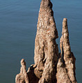 Cypress Knees by Bob Phillips