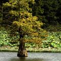 Cypress Matters by Jeff Kurtz