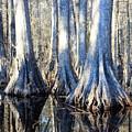 Cypress Reflection by Carol Groenen
