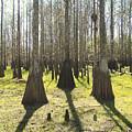 Cypress Sentinals by Peg Urban