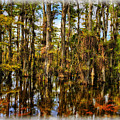 Cypress Strand Everglades by Jim Dohms