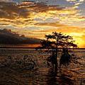 Cypress Sunset by Judy Vincent