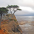 Cypress Tree At Pebble Beach by Gary Beeler