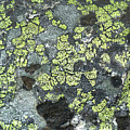 D07343-dc Lichen On Rock by Ed Cooper Photography