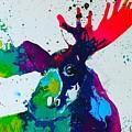Da-moose by Kasha Ritter