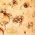 Da Vinci Flower Study Gold By Da Vinci by Tony Rubino